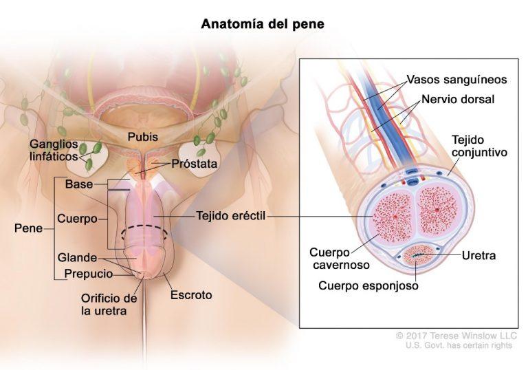 tumore prostata 2 cm 1