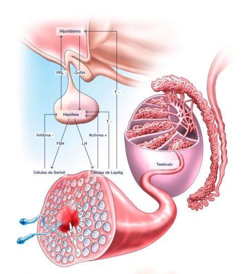 prostata 3